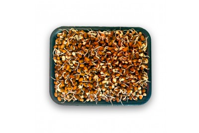 Red Chawali Sprout (AE) -Pack of 200g