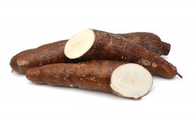 Tapioca (IN) / تابيوكا هندية