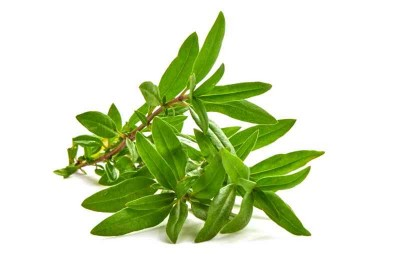 Wild Thyme Leaves  - Pack of 30g